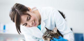 Spese veterinarie: pagamenti tracciabili e nuovo tetto di spesa