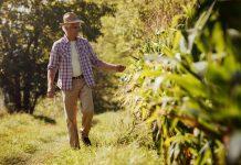 Esonero contributivo agricoltura: nuovo modulo per la presentazione delle istanze