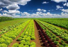 Modello Redditi per gli imprenditori agricoli che compilano il prospetto degli aiuti di Stato
